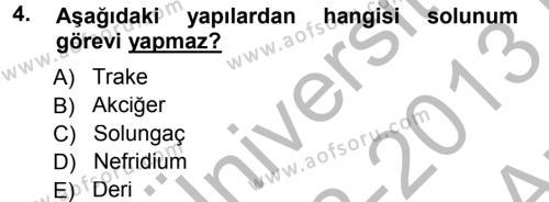 Tarım Bölümü 2. Yarıyıl Genel Biyoloji II Dersi 2013 Yılı Bahar Dönemi Ara Sınavı 4. Soru