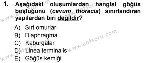 Temel Veteriner Anatomi Dersi 2012 - 2013 Yılı (Final) Dönem Sonu Sınav Soruları 1. Soru