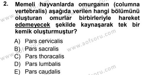 Temel Veteriner Anatomi Dersi 2012 - 2013 Yılı (Final) Dönem Sonu Sınav Soruları 2. Soru
