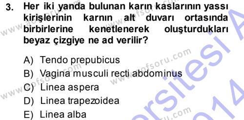 Temel Veteriner Anatomi Dersi 2013 - 2014 Yılı Dönem Sonu Sınavı 3. Soru