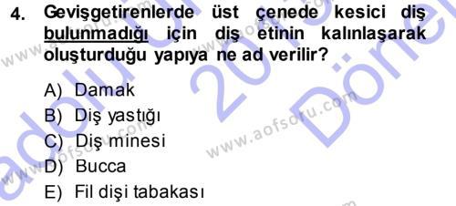 Temel Veteriner Anatomi Dersi 2013 - 2014 Yılı (Final) Dönem Sonu Sınavı 4. Soru