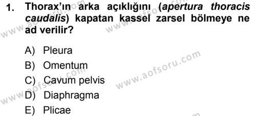 Temel Veteriner Anatomi Dersi 2014 - 2015 Yılı Ara Sınavı 1. Soru