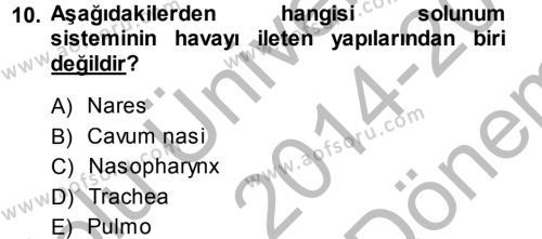 Temel Veteriner Anatomi Dersi 2014 - 2015 Yılı Dönem Sonu Sınavı 10. Soru 1. Soru