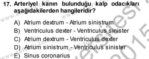 Temel Veteriner Anatomi Dersi 2014 - 2015 Yılı Dönem Sonu Sınavı 17. Soru 1. Soru