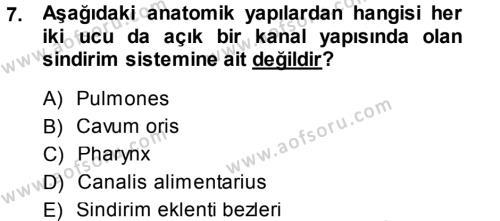 Temel Veteriner Anatomi Dersi 2014 - 2015 Yılı Dönem Sonu Sınavı 7. Soru 1. Soru