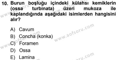Temel Veteriner Anatomi Dersi 2014 - 2015 Yılı Tek Ders Sınavı 10. Soru
