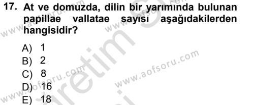 Temel Veteriner Anatomi Dersi 2014 - 2015 Yılı Tek Ders Sınavı 17. Soru 1. Soru