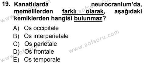 Temel Veteriner Anatomi Dersi 2014 - 2015 Yılı Tek Ders Sınavı 19. Soru 1. Soru