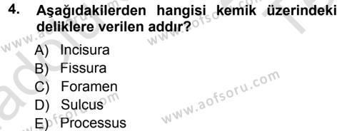 Temel Veteriner Anatomi Dersi 2014 - 2015 Yılı Tek Ders Sınavı 4. Soru 1. Soru
