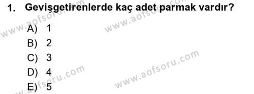 Temel Veteriner Anatomi Dersi 2015 - 2016 Yılı (Vize) Ara Sınavı 1. Soru
