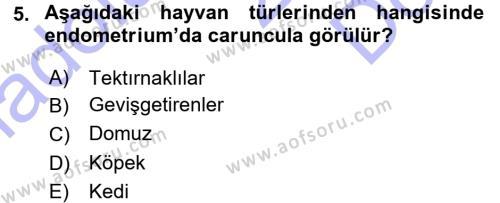 Temel Veteriner Anatomi Dersi 2015 - 2016 Yılı (Final) Dönem Sonu Sınavı 5. Soru