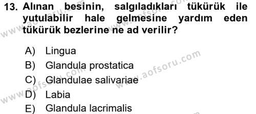 Temel Veteriner Anatomi Dersi 2016 - 2017 Yılı Ara Sınavı 13. Soru 1. Soru