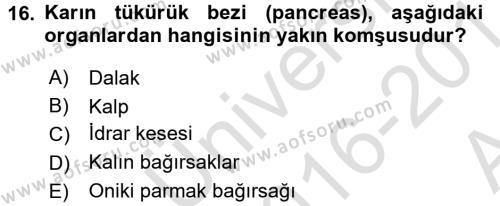 Temel Veteriner Anatomi Dersi 2016 - 2017 Yılı (Vize) Ara Sınavı 16. Soru