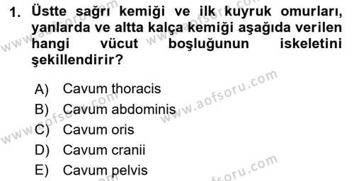Temel Veteriner Anatomi Dersi 2017 - 2018 Yılı 3 Ders Sınavı 1. Soru
