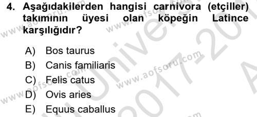 Temel Veteriner Anatomi Dersi 2017 - 2018 Yılı (Vize) Ara Sınavı 4. Soru
