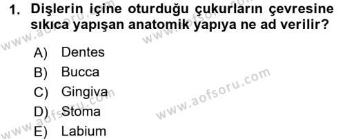 Temel Veteriner Anatomi Dersi 2017 - 2018 Yılı (Final) Dönem Sonu Sınav Soruları 1. Soru