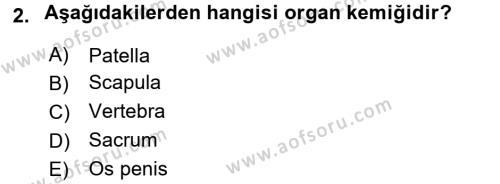 Temel Veteriner Anatomi Dersi 2017 - 2018 Yılı (Final) Dönem Sonu Sınav Soruları 2. Soru