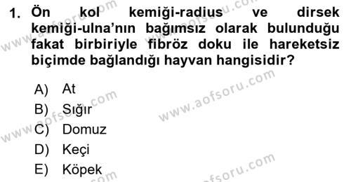Temel Veteriner Anatomi Dersi 2018 - 2019 Yılı 3 Ders Sınav Soruları 1. Soru