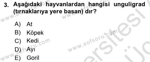 Temel Veteriner Anatomi Dersi 2018 - 2019 Yılı 3 Ders Sınav Soruları 3. Soru