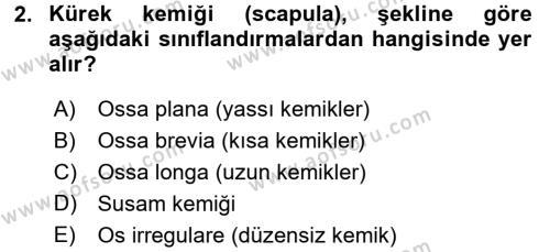 Temel Veteriner Anatomi Dersi 2018 - 2019 Yılı (Vize) Ara Sınavı 2. Soru