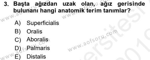 Temel Veteriner Anatomi Dersi 2018 - 2019 Yılı (Vize) Ara Sınavı 3. Soru