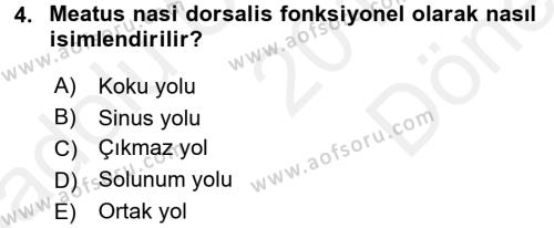 Temel Veteriner Anatomi Dersi 2018 - 2019 Yılı (Final) Dönem Sonu Sınav Soruları 4. Soru