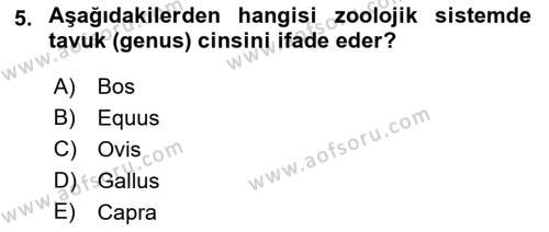Temel Zootekni Dersi Ara Sınavı Deneme Sınav Soruları 5. Soru