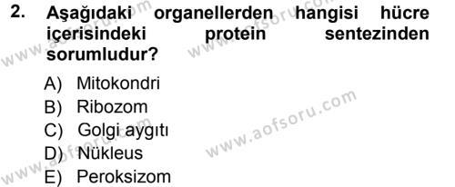 Temel Veteriner Genetik Dersi 2012 - 2013 Yılı (Final) Dönem Sonu Sınav Soruları 2. Soru