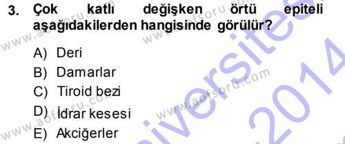 Temel Veteriner Histoloji ve Embriyoloji Dersi 2013 - 2014 Yılı (Final) Dönem Sonu Sınavı 3. Soru