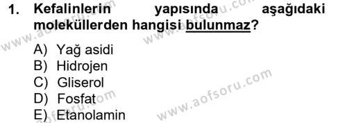 Temel Veteriner Biyokimya Dersi 2012 - 2013 Yılı (Vize) Ara Sınavı 1. Soru