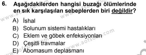 Temel Sürü Sağlığı Yönetimi Dersi 2012 - 2013 Yılı Ara Sınavı 6. Soru 1. Soru