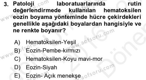 Temel Veteriner Patoloji Dersi 2016 - 2017 Yılı (Final) Dönem Sonu Sınav Soruları 3. Soru
