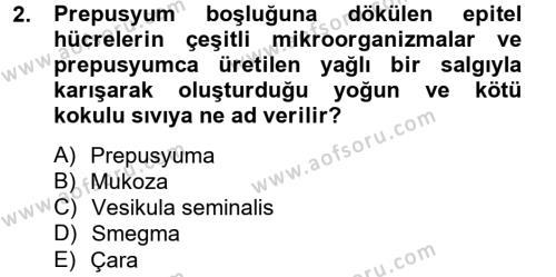 Doğum Bilgisi ve Suni Tohumlama Dersi 2012 - 2013 Yılı (Final) Dönem Sonu Sınav Soruları 2. Soru