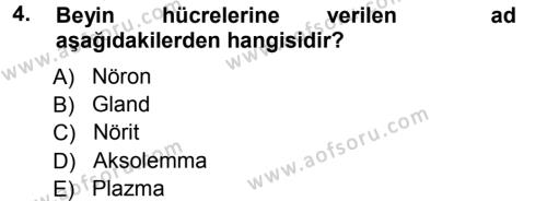 Yaşlı ve Hasta Bakım Hizmetleri Dersi 2012 - 2013 Yılı Ara Sınavı 4. Soru