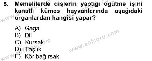 Tarım Bölümü 4. Yarıyıl Hayvan Besleme Dersi 2013 Yılı Bahar Dönemi Dönem Sonu Sınavı 5. Soru
